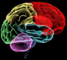 hjärna 1