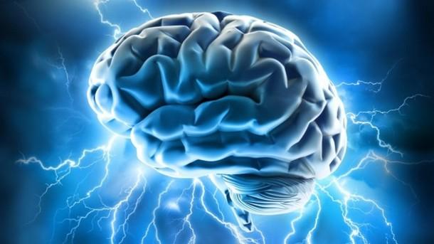 hjärna 2